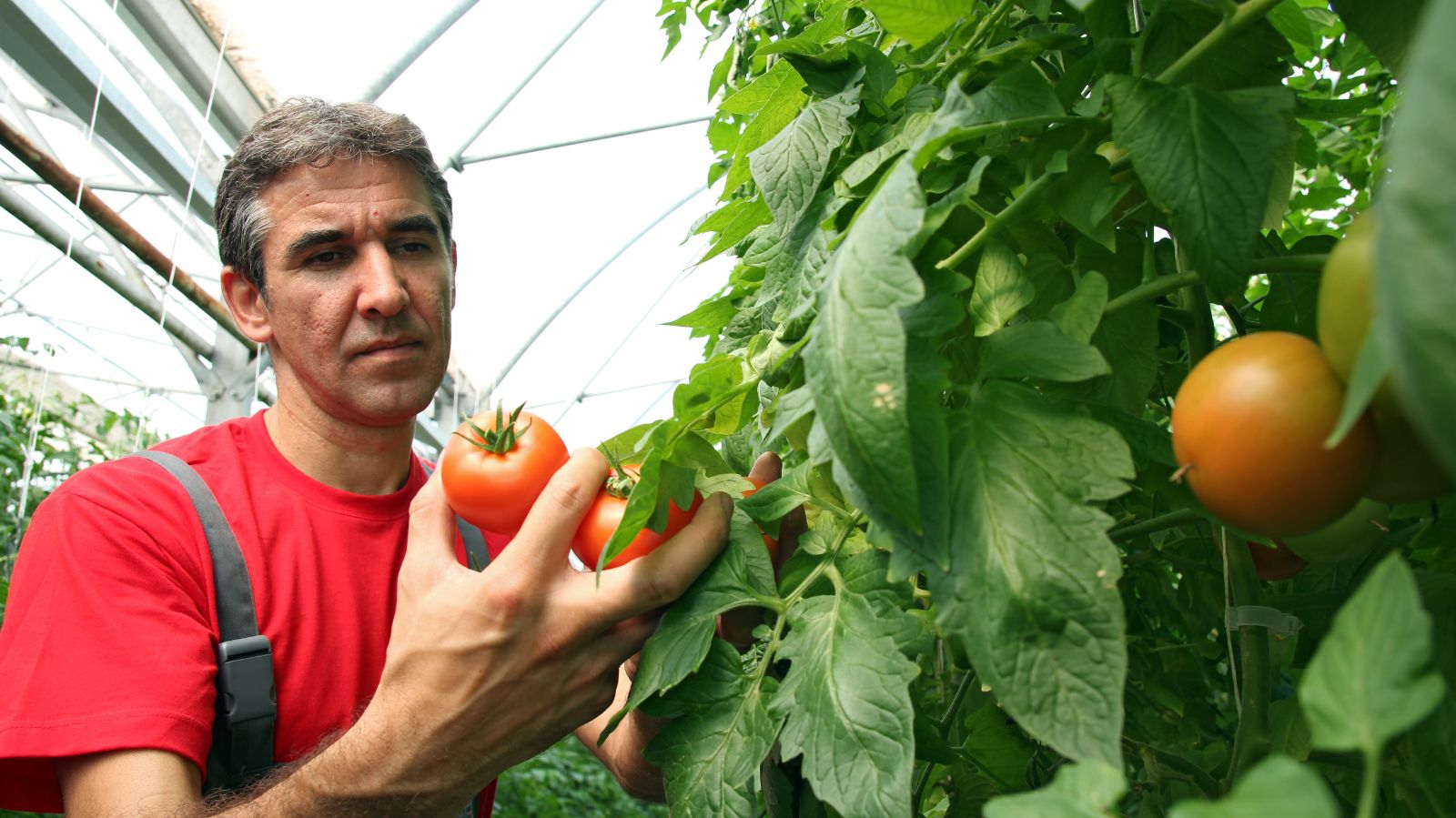 """Statewide Agriculture Community Launches """"Grow NY Farms"""" Initiative To Highlight Concerns Of Growers, Farmers And Agribusinesses"""
