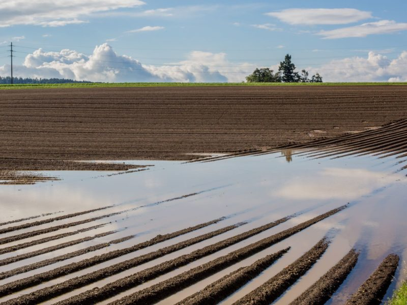Saratoga County Farmer Worries As Rain Hinders Planting